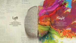 lef and right side of the brain